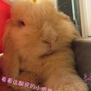 绕绕家的兔大嘟(2507174)