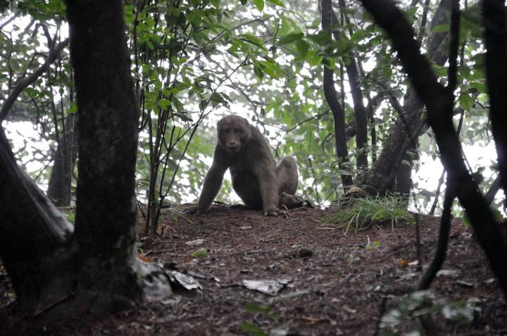 黄山短尾猴 – mtime时光网