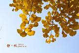 秋天の童话