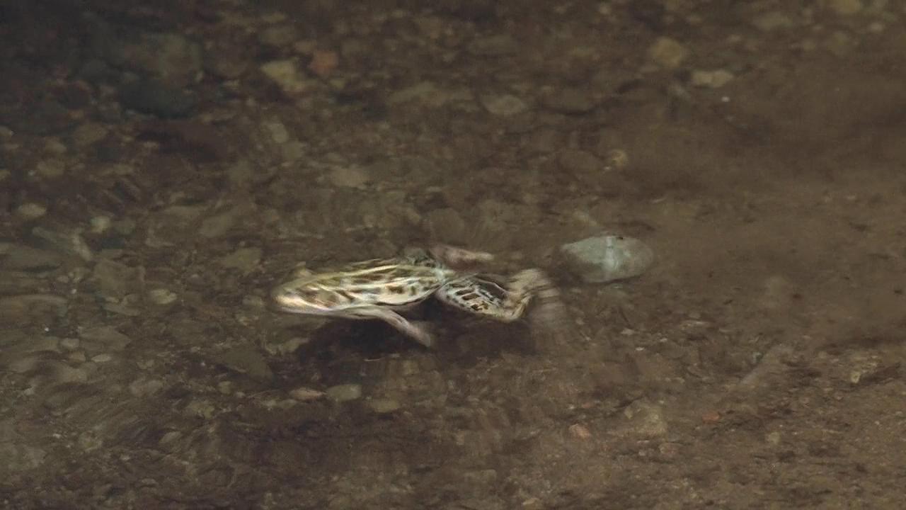 壁纸 动物 两栖 蛙 1280_720