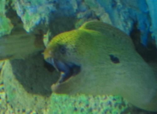 17奇怪的鱼2图片