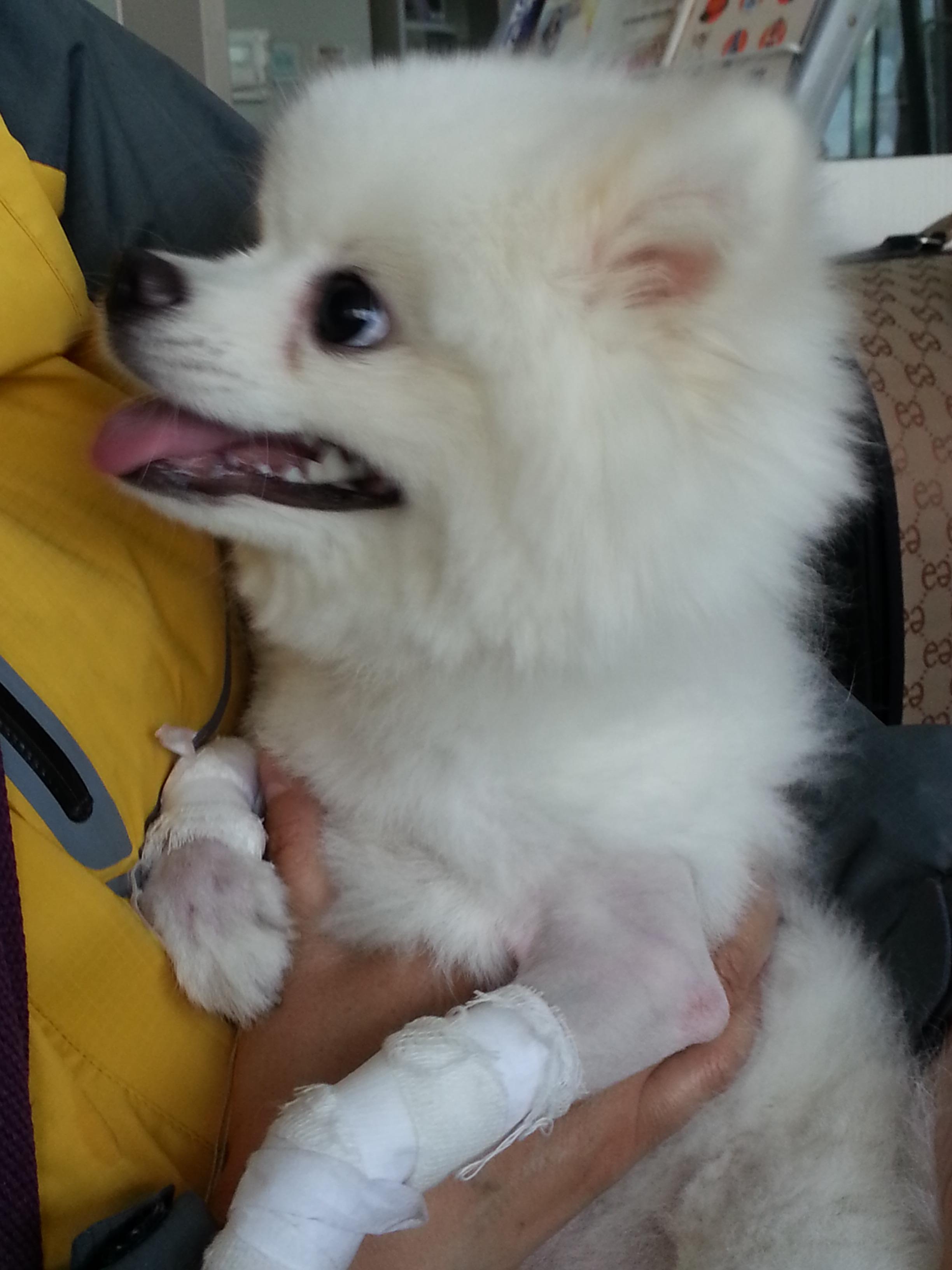 20130521 宠物医院遇见的可爱博美
