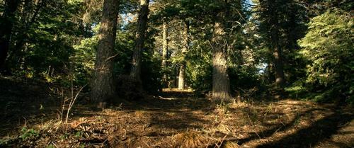 qq头像孤独森林